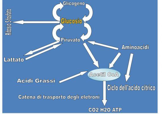La reale necessità dell'insulina per la captazione di glucosio