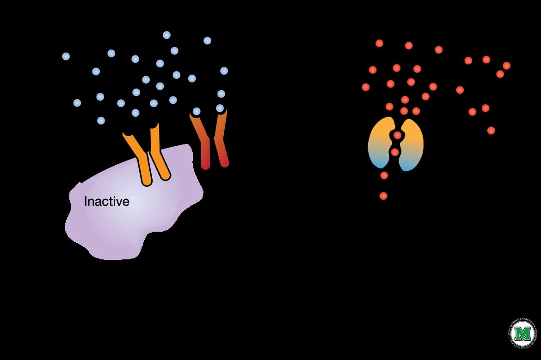 Trasportatori di glucosio (GLUT)